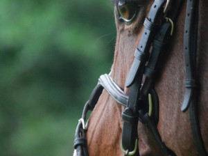 JumperBridle-685x10241.jpg