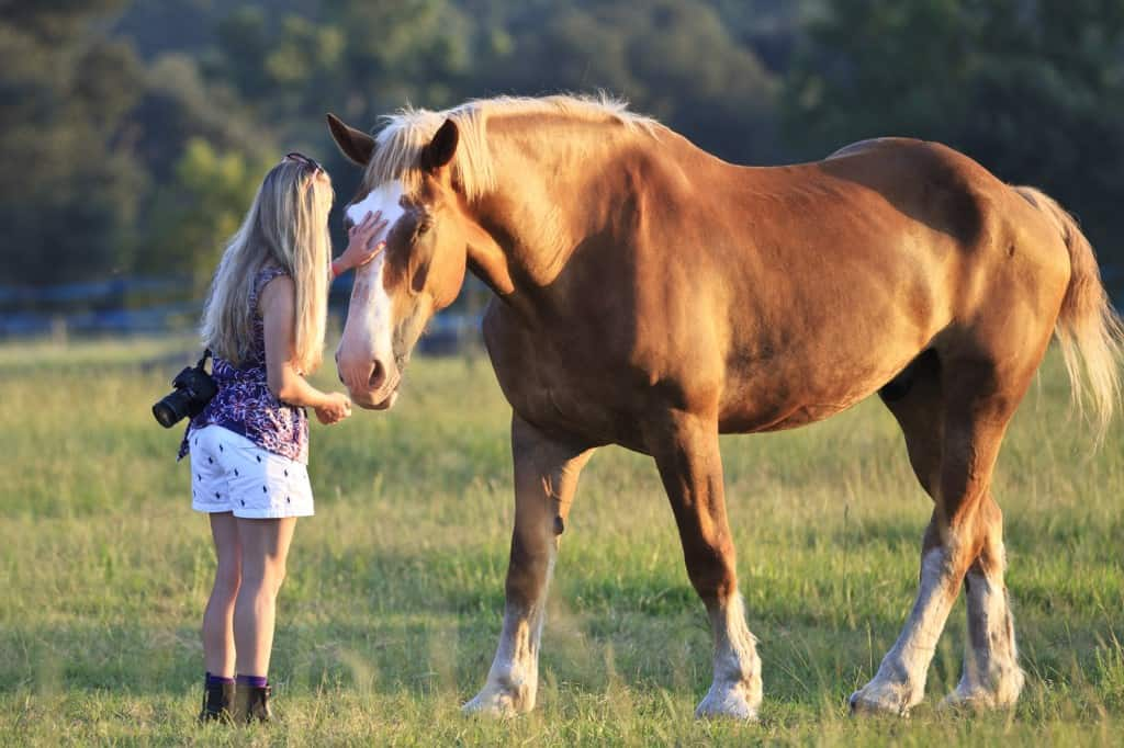 Sunset Draft Horse Photography By Kathy Cline Equestrian Stylist