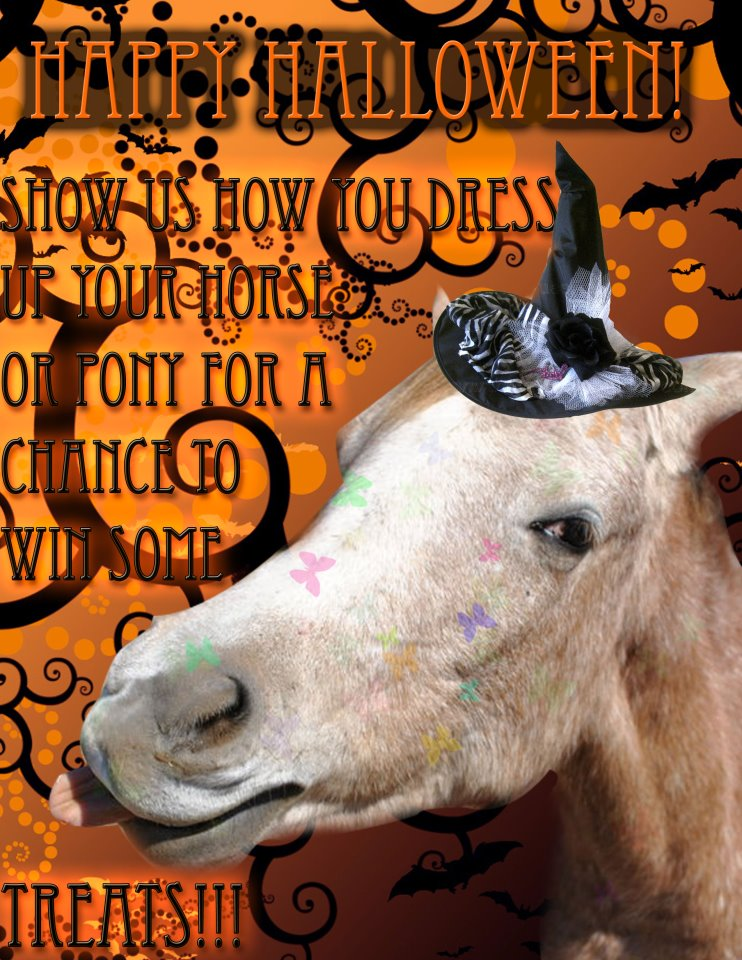 Horses And Halloween Equestrian Stylist