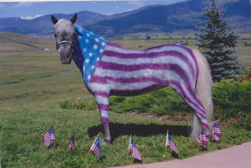 Happy July 4th Equestrian Stylist