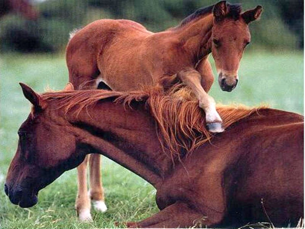 Baby Horses Playing Sk5601 Mother And On Pictures