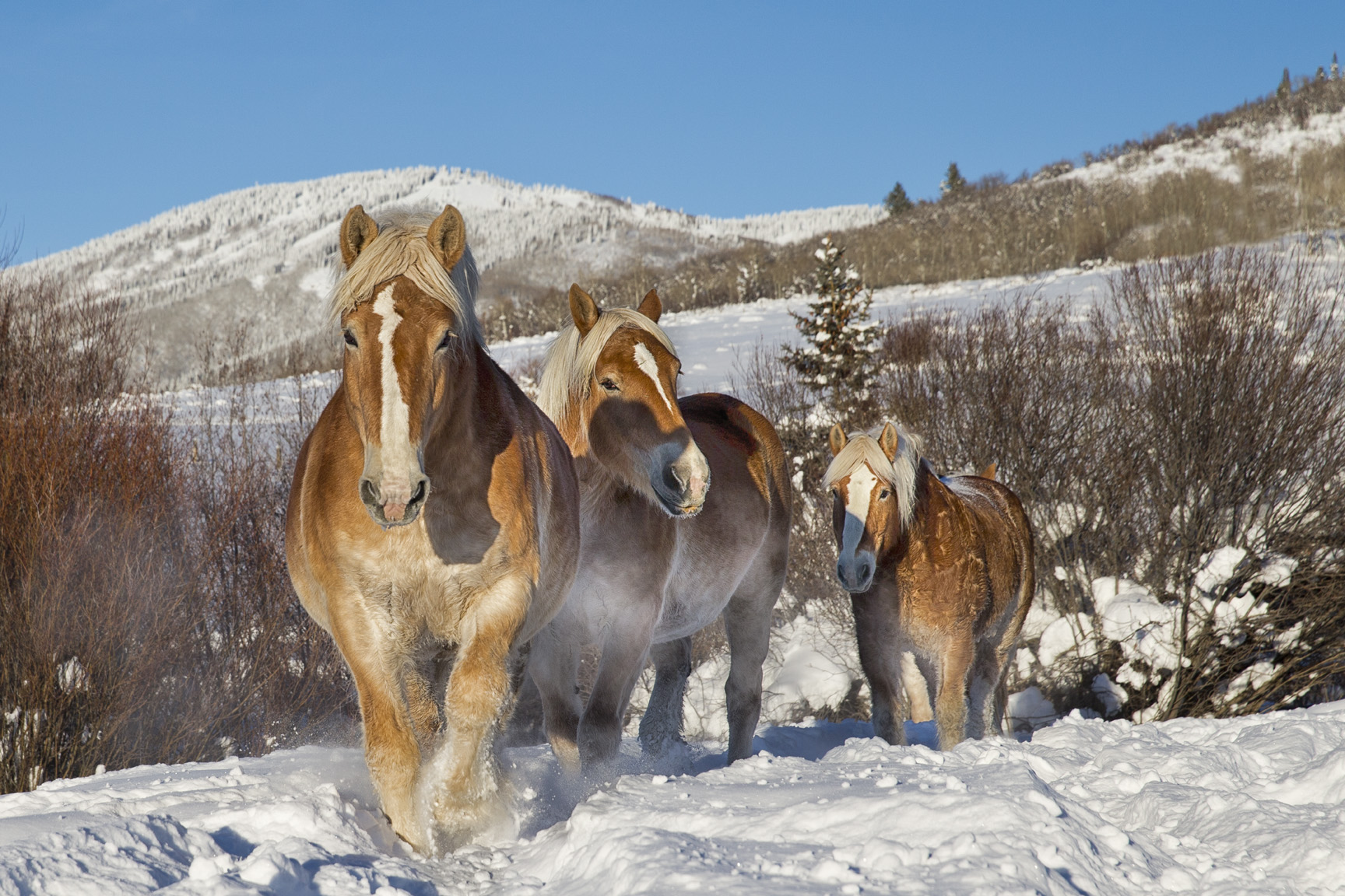 Winter Wonderland Horses By Kathy Cline Equestrian Stylist