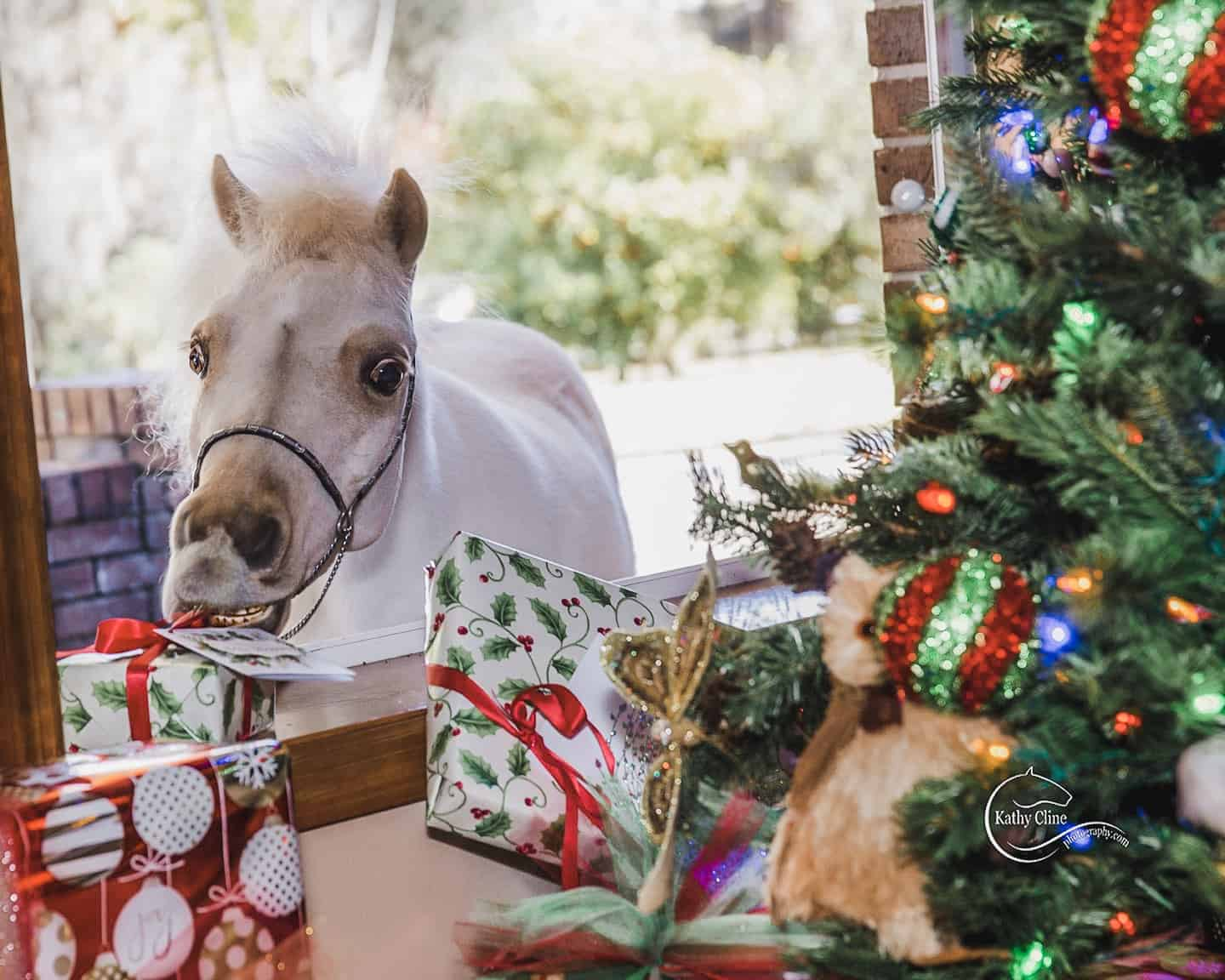 Merry Christmas From The Farm Equestrian Stylist